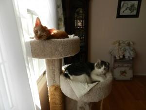 Jacob & Rudy 040613-1