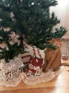 Rudy's first xmas tree 120113